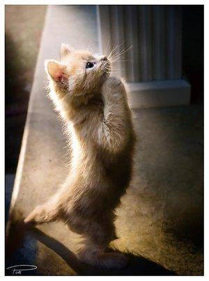 Newsletter??????? Praying_kagura_pt__ii_by_photo_cap