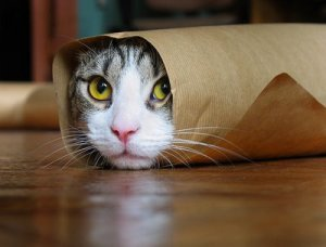 rolled-cat