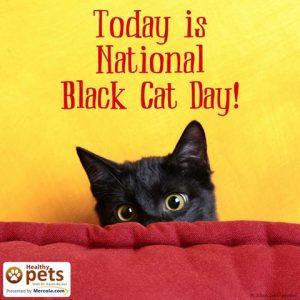 black cat day